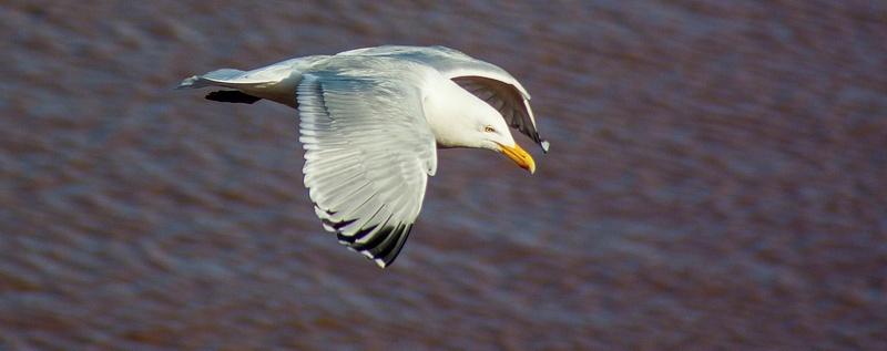 eagle may14 069