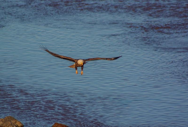 eagle may14 076