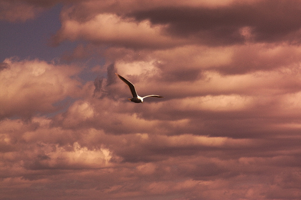 IMG_1863 by Colt45cal