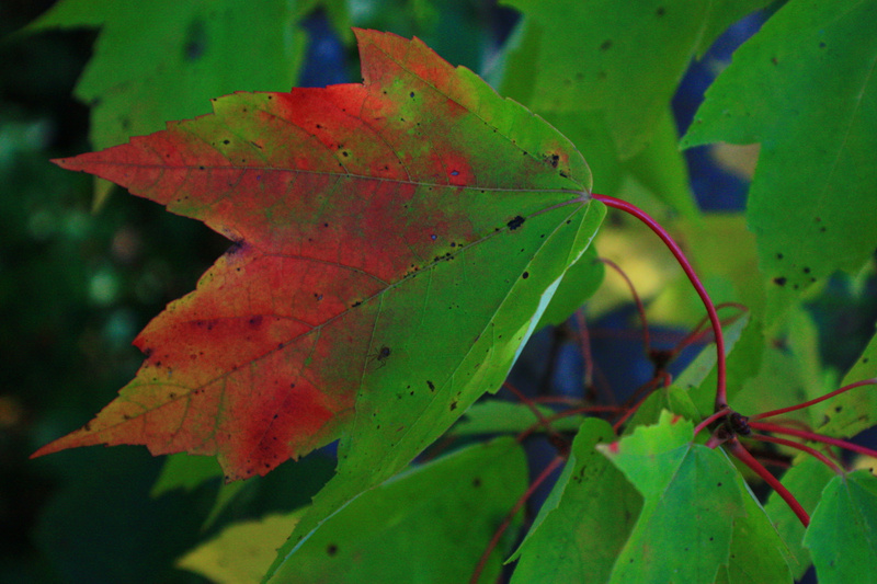 fall pictures 001