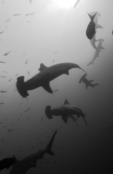 Cocos Island Seahunter Liveaboard 2016 by Denver Divers