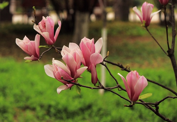 IMG_8759_副本 by A-chinese