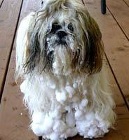 dog-with-snow