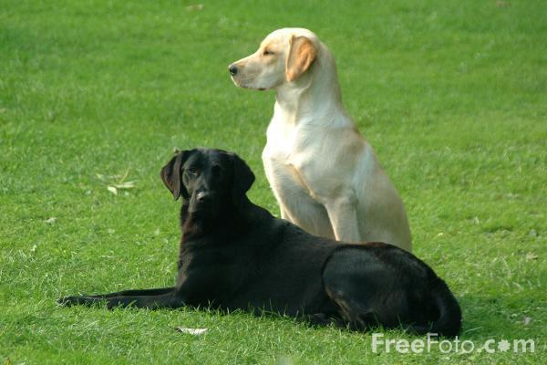 01_07_1---Pair-of-Dogs_web by slickpic200