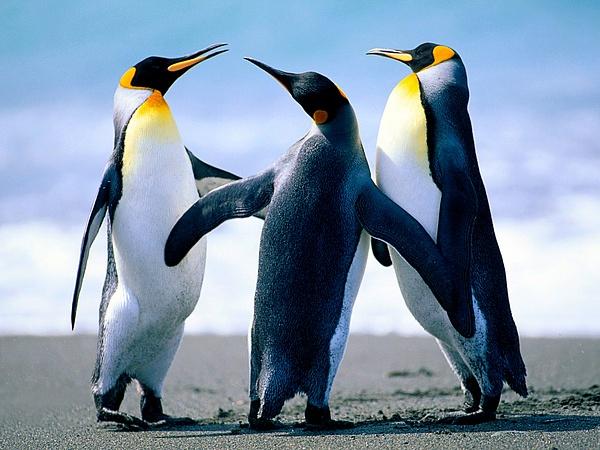 Penguins by slickpic200