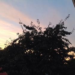 Plumtree