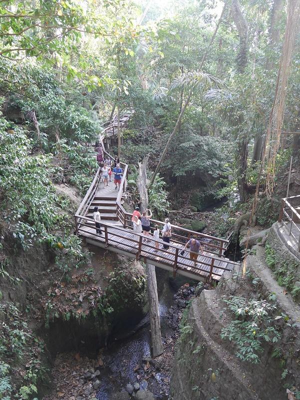 Monkey Forestin viidakkoa