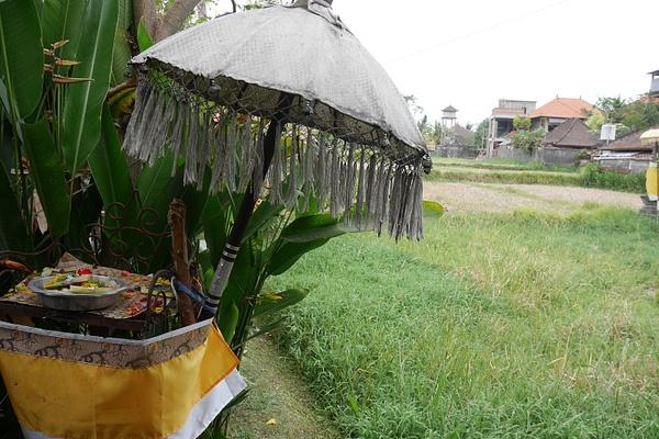 Ubudin Monkey Forest Roadin riisipellon laidassa by hannajamikko