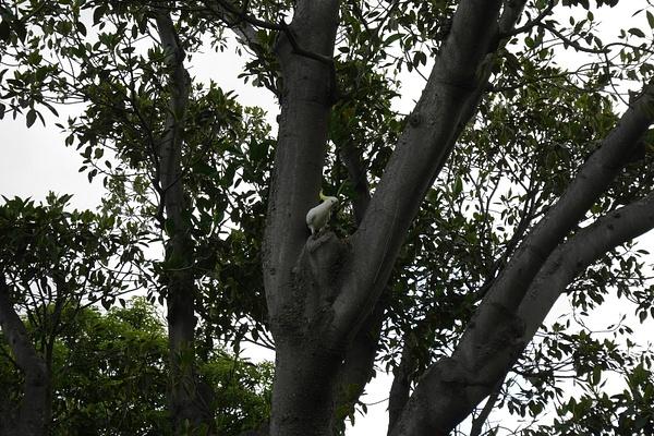Kakadu by hannajamikko