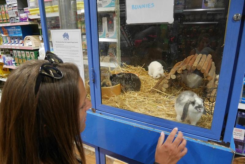 Bondi Junctionissa on eläinkauppa täynnä kanin, kissan ja koiranpentuja. Ihania mutta raukkoja.