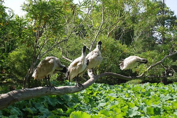Paikallisia lintuja, vähän kuin lokkeja täälläpäin by hannajamikko