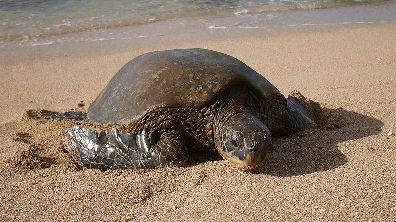 Kilpikonnan rantautuminen