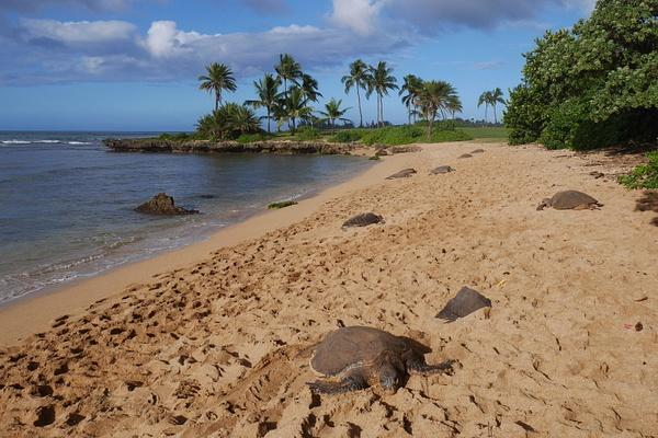 Hawaiji by hannajamikko