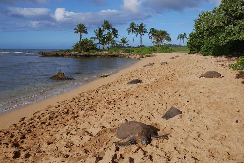 Yhteensä yhdeksän valtavaa kilpparia oli tällä rannalla