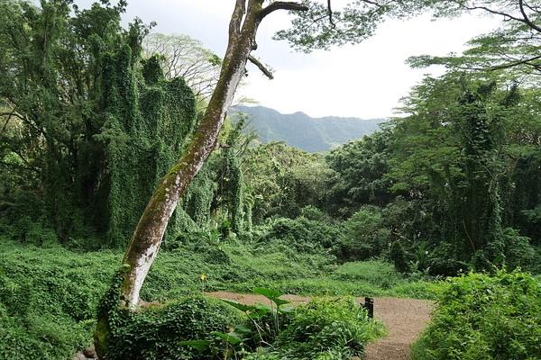 Näissä maisemissa on kuvattu Jurassic Parkia, Lostia yms. by hannajamikko
