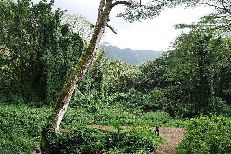 Näissä maisemissa on kuvattu Jurassic Parkia, Lostia yms.