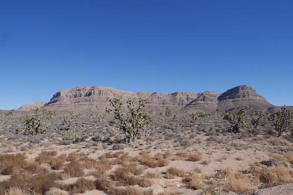 Joshua puita sekä Grand Canyonin alkua by hannajamikko