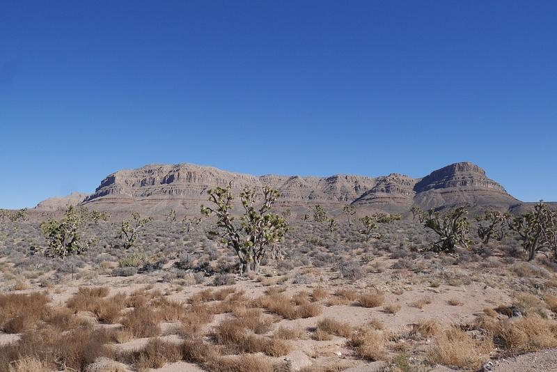 Joshua puita sekä Grand Canyonin alkua