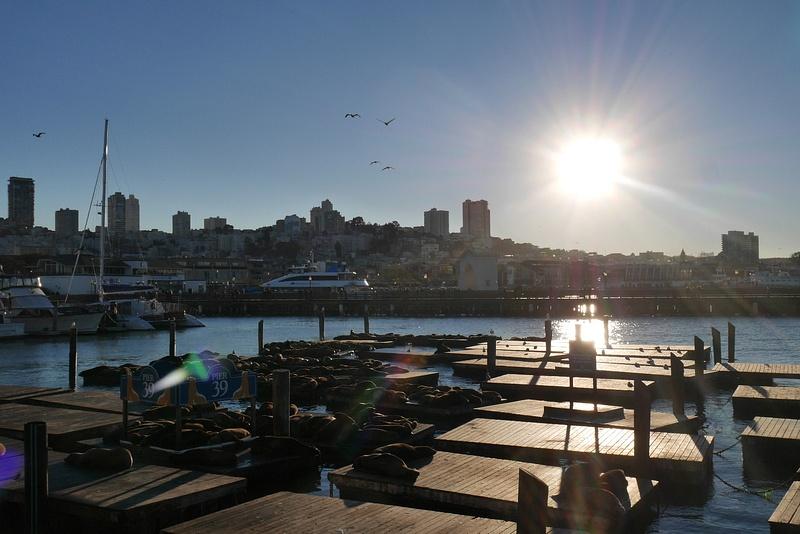 Fisherman's Wharfin merileijonat ja pelikaanit