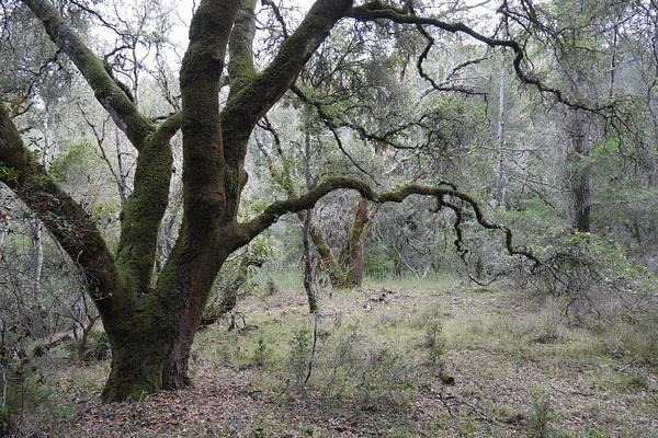 Taianomainen hiljainen tunnelma metsässä by hannajamikko