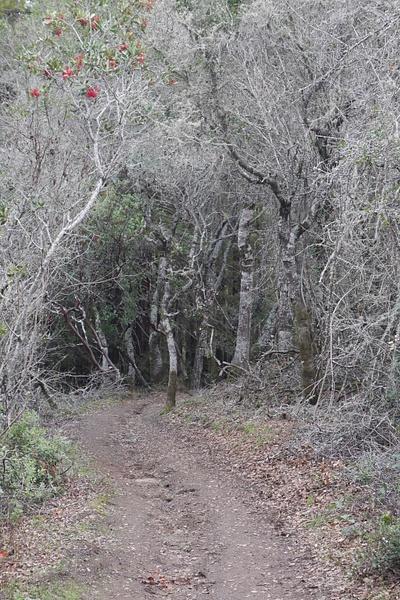 Ghost Forest by hannajamikko