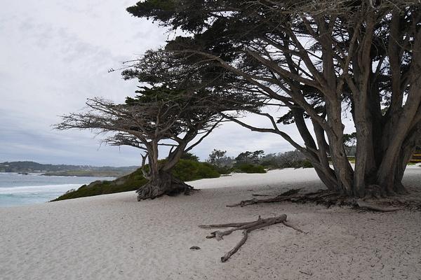 Carmel by the Sea by hannajamikko