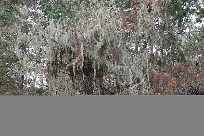 Mikko ja kummituspuu