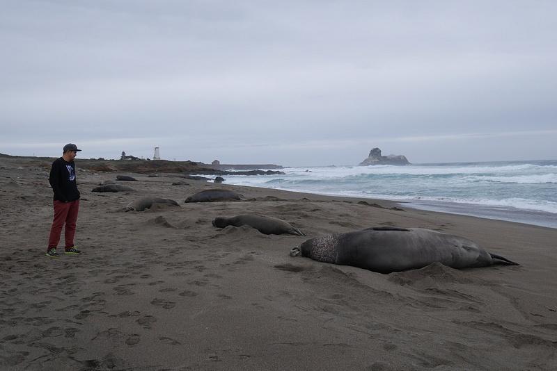 Merinorsuja ja merileijonia