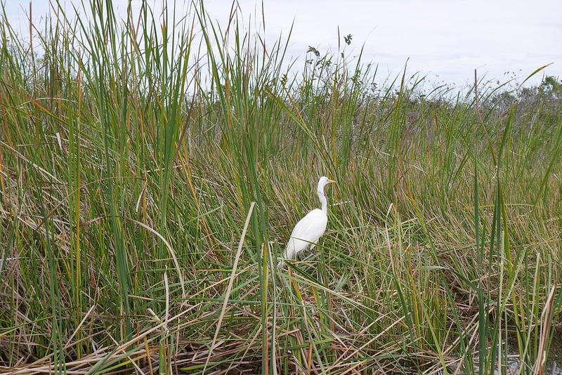 USAn toiseksi isoimmassa kansanpuistossa Evergladesissä on satoja eri lintulajeja
