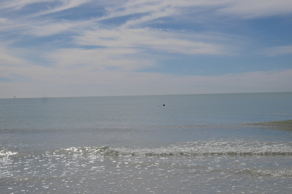 Delfiini! by hannajamikko