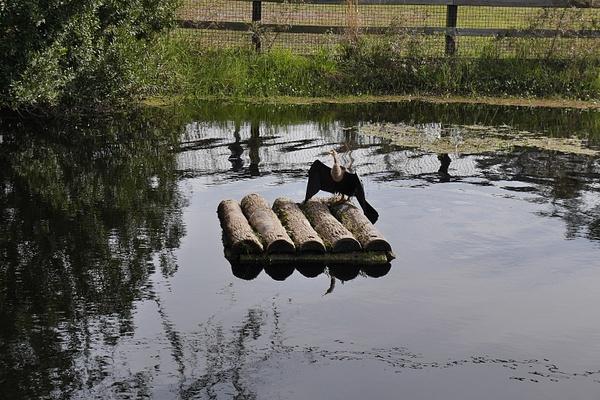 Siipien kuivailua Homosassa Springsissä by hannajamikko