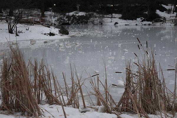 Jäätynyt lampi Central Parkissa by hannajamikko