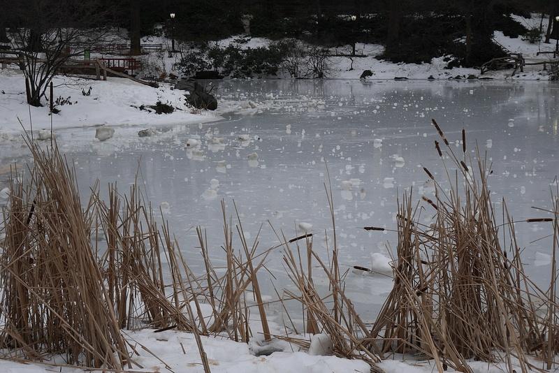 Jäätynyt lampi Central Parkissa