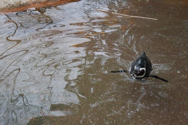 Bronx Zoo ja pingviini by hannajamikko