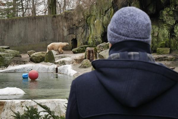 Bronx Zoo ja jääkarhu by hannajamikko