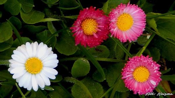 Virágok by KKrizma