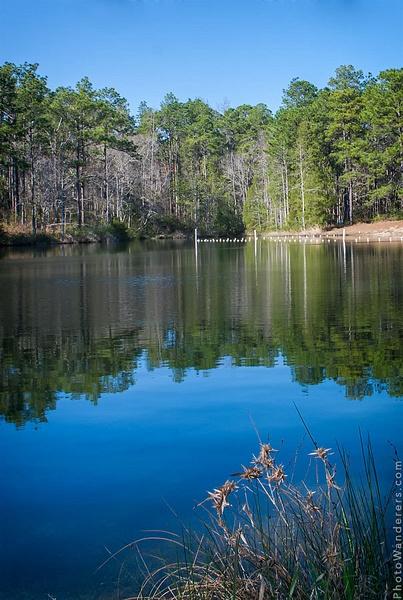 Лесное озеро по дороге в Таллахасси, Флорида by Julia Sakovska