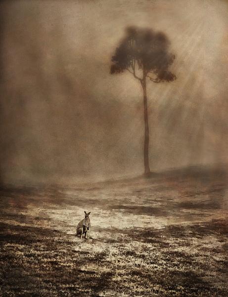 Bunya Mist.textures by CliveHammond2446
