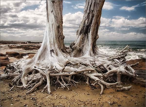 Hook bay low tide