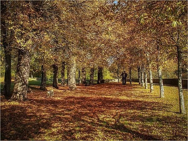 Vezelay France by CliveHammond2446