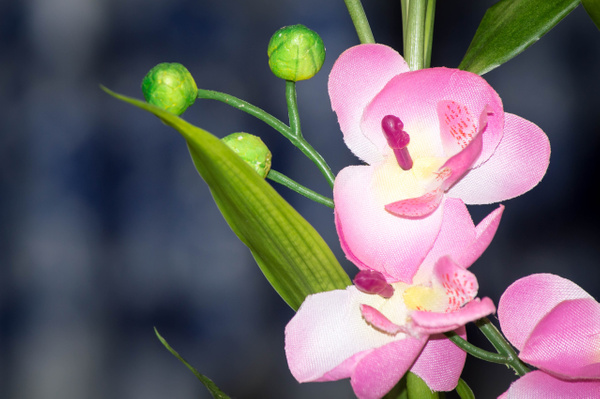 Flowers by JoseFlores