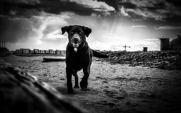 1000_Charlottenlund_Dog by -Ashen-