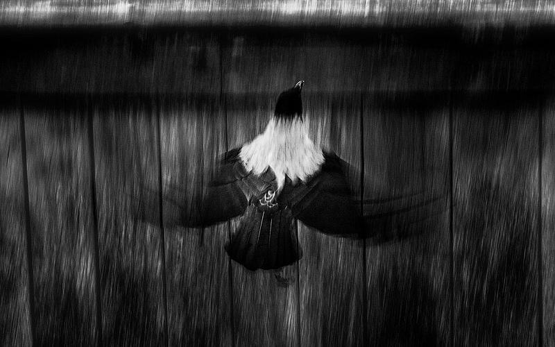 1000_Crow_4