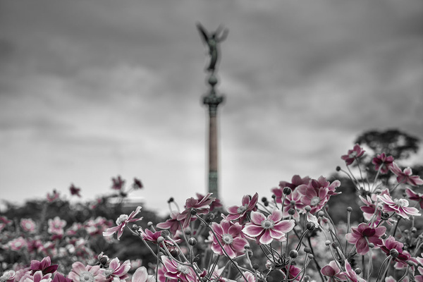 1000_Flowers_1 by -Ashen-