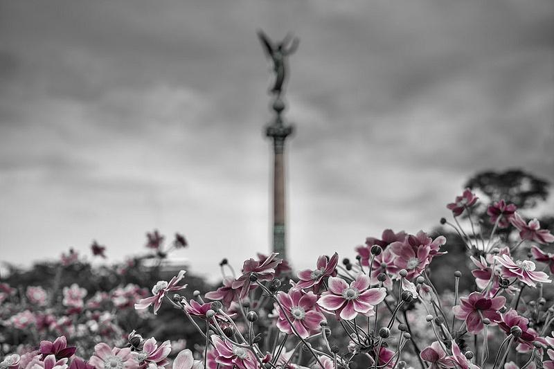 1000_Flowers_1