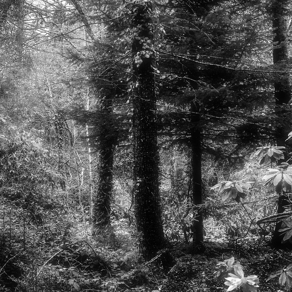 1000_Forest_25 by -Ashen-