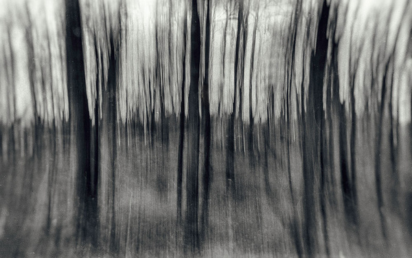 1000_Forest_26 by -Ashen-