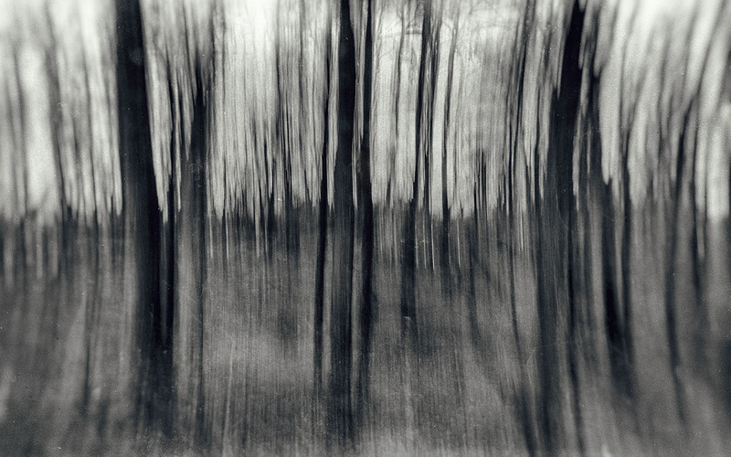 1000_Forest_26