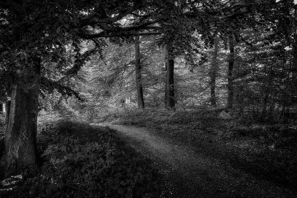1000_Forest_27_BW by -Ashen-
