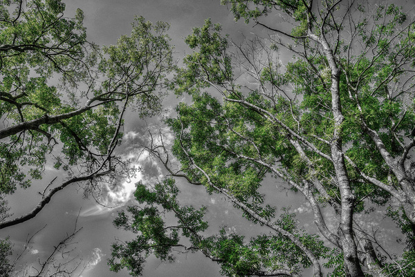 1000_Forest_33_B by -Ashen-